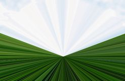 Background of grass and sky Stock Images