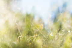 Background with grass and sky Royalty Free Stock Photography