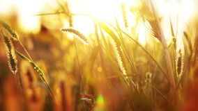 Background with grass and sunshine Royalty Free Stock Photography