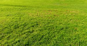 Background of grass. Background of the grass texture stock photo