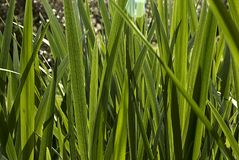 Background of a Grass texture backlit stock photography