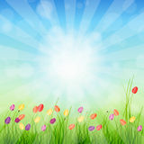 Background with grass and tulips against sunny Royalty Free Stock Photos