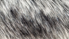 Background gray fur Stock Images