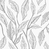 Background of gray line leaf sketch Royalty Free Stock Images