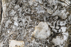 Background of gray stone surface Royalty Free Stock Photos