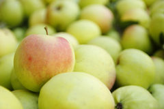 Background of green apples Stock Photos