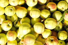 Background of green apples Stock Image