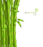 Background with green bamboo Royalty Free Stock Photography
