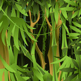 Background of green bamboo forest with lianas Stock Photos