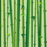 Background with green bamboo stems, oriental style Stock Photos