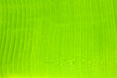 Background green banana leaf. Green banana leaf background with water stop stuck Stock Photo