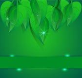 Background green banner petal Stock Image
