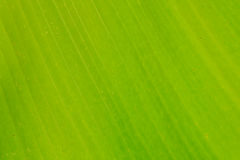 Background green Royalty Free Stock Photo