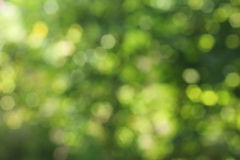Background green bokeh Royalty Free Stock Image