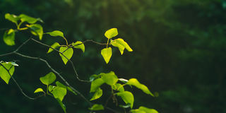 Background with green branches at sunset Royalty Free Stock Image