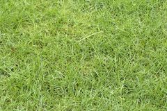 Background of green bright beautiful lawn close-up