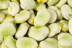 Background of green broad bean close up Royalty Free Stock Photos