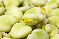 Background of green broad bean close up Stock Photography