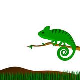 Background with green chameleon. Background with cartoon green chameleon and grass Royalty Free Stock Image