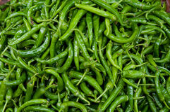 Background of green chillies Stock Images