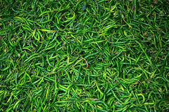 Background of green chillies Royalty Free Stock Image