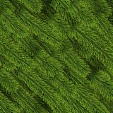 Christmas background with spruce branches. Background of green Christmas tree branches. Fir vector pattern texture illustration Royalty Free Stock Photography