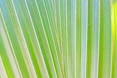 background of green coconut leaf royalty free stock photos
