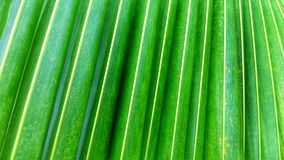 Background green coconut leaves Stock Photos