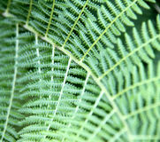 Background with green fern Stock Image