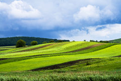 Background with green field. And fluffy clouds Royalty Free Stock Photos