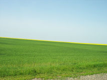 Background of green field and blue sky Stock Photography