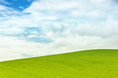 Background of green field with blue sky Stock Image