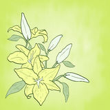 Background with green flower lily, spring theme. Invitation or greeting card Vector ..illustration Royalty Free Stock Photo