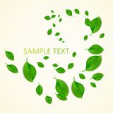 Background with green fresh leaves and place for your text . Vector illustration Stock Image