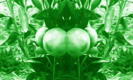Background green fruit manipulation. Using photoshop can be used for background Royalty Free Stock Photos