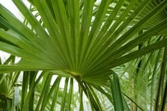 Background of green graphic palm leaves royalty free stock images