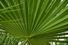 Background of green graphic palm leaves royalty free stock photography