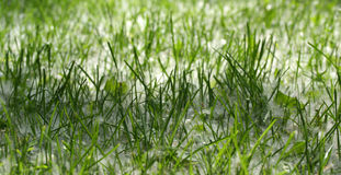 Background of green grass Stock Photography