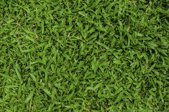 Background of green grass Stock Image