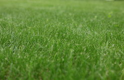 Background (green grass) Royalty Free Stock Images