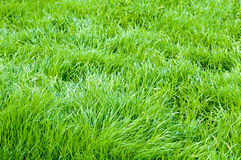 Background of a green grass Royalty Free Stock Photos