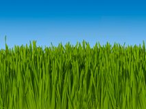 Background of Green Grass Against Blue Sky (macro focus)  16 inc Stock Photo