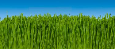 Background of Green Grass Against Blue Sky (macro focus)  16 inc. Hes wide  @  300dpi ~ Includes Clipping Path Stock Image