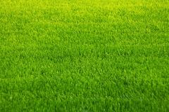 Background of green grass. Amazing grass texture. Green background.Park lawn texture stock images