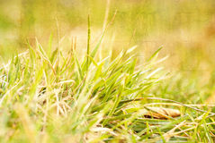 Background of green grass, artwork in painting style Stock Photos