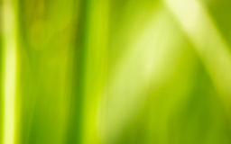 Background Green grass, blur Stock Photos