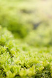 Background with green grass Stock Images