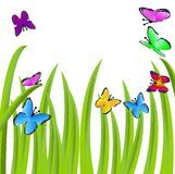 Background  with a green grass and butterflies Royalty Free Stock Images