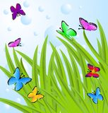 Background  with a green grass and butterflies Royalty Free Stock Photography
