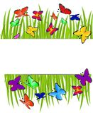 Background  with a green grass and butterflies Royalty Free Stock Photo